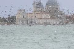 Venice Series